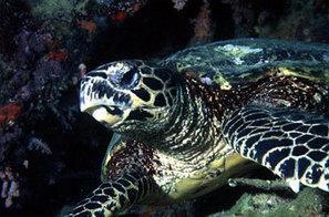 Animales en peligro protegidos por la reserva Everglades   Parque Nacional Everglades de Florida USA   Scoop.it