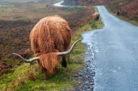 Scotland's wild isles: a nature-packed tour of the Southern Hebrides - Lonely Planet | The Vacation & Trip Destination Ideas Round-up | Scoop.it