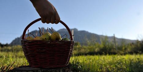 Nuovi modelli di consumo, le sfide per l'agroalimentare trentino - Viniesapori.net   Eticamente lifestyle, modelli alternativi, ricette   Scoop.it