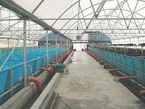World's biggest fish farm launched in UAE - Emirates 24/7 | seafood marketing | Scoop.it