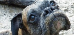 My Dog the Meme: The Origins of the All-Time Greatest Animal Memes | Dogs | Scoop.it