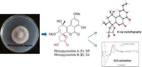 Bioactive Dibenzo-α-pyrone Derivatives from the Endophytic Fungus Rhizopycnis vagum Nitaf22 | Rice Blast | Scoop.it