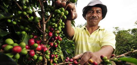 Un parque tecnológico español para sacarle todo el sabor al café de Colombia - Noticias de Tecnología | RSC Valor compartido | Scoop.it