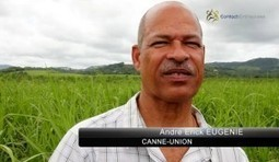 CONTACT ENTREPRISES – Filière Canne-Sucre-Rhum de ... | Rhum | Scoop.it