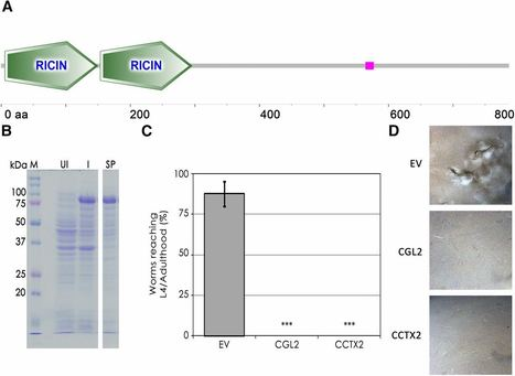 Identification of a Novel Nematotoxic Protein by Challenging the Model Mushroom Coprinopsis cinerea with a Fungivorous Nematode   Plant Immunity And Microbial Effectors   Scoop.it