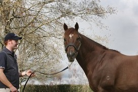 Support-limb laminitis forces leading Thoroughbred stallion Thorn Park out of service in New Zealand  « The Informant (NZ) | Hoofcare and Lameness | Scoop.it