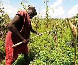 "The GMO, Western BigAg Concept Consortium Has Invaded Africa | Corporate ""Social"" Responsibility – #CSR #Sustainability #SocioEconomic #Community #Brands #Environment | Scoop.it"