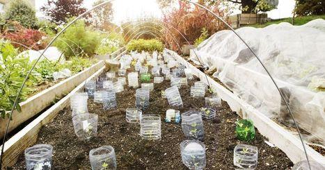 6 inspiring urban gardens that impact the community | jardins partagés | Scoop.it
