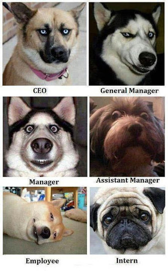 Which Face do you like in your Office | Funny Pic And Wallpapers | Scoop.it