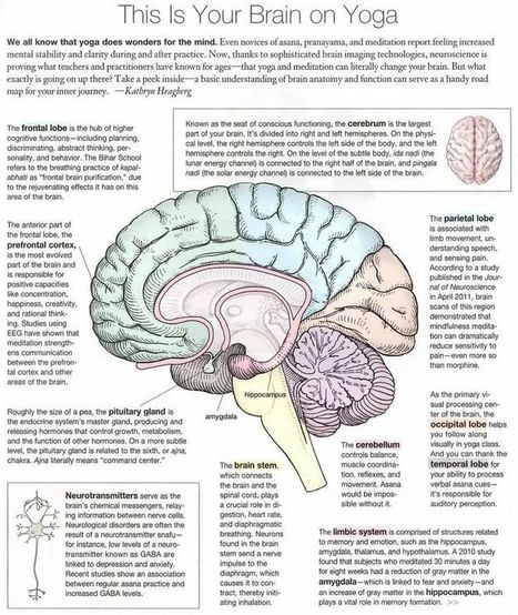 This is Your Brain on Yoga. {Infographic Magic} | Wellbeing | Scoop.it