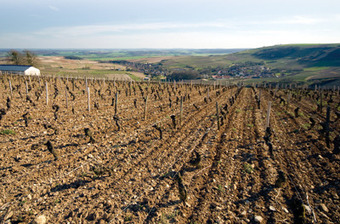Chablis churns out outstanding red Burgundy | Vitabella Wine Daily Gossip | Scoop.it