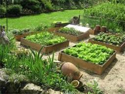 Comment créer son premier jardin potager en 7 points | Design de permaculture | Scoop.it