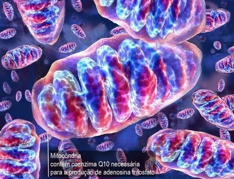 larECOnsciente: Nutrição: Coenzima Q10 | Inovação, Saúde e Bem-Estar | Scoop.it