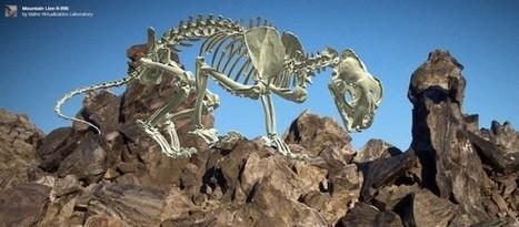 [ARTICLE CLIC] Avec son musée virtuel, le musée d'histoires naturelles de l'Idaho offre un accès 3D à ses trésors | Clic France | Scoop.it