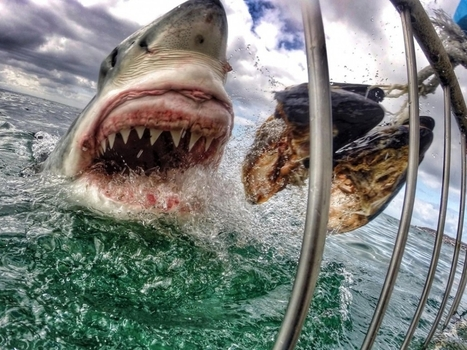GRAND FORMAT. 14 images extraordinaires prises avec une GoPro | Epic pics | Scoop.it