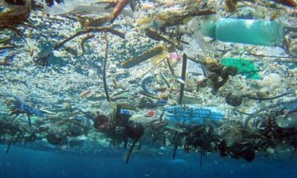 Plásticos: los biodegradables también son peligrosos | Agua | Scoop.it