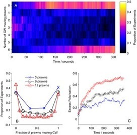 Multi-scale Inference of Interaction Rules in Animal Groups Using Bayesian Model Selection | Social Foraging | Scoop.it