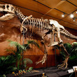 Tyrannosaurus Rex Skeleton To Be Auctioned Off In Las Vegas | Science Wow Factor | Scoop.it