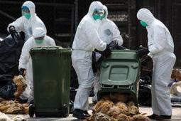 Threatwatch: Bird flu's back and it's brought friends - health - 11 March 2015 - New Scientist | Avian influenza virus A(H7N9) | Scoop.it