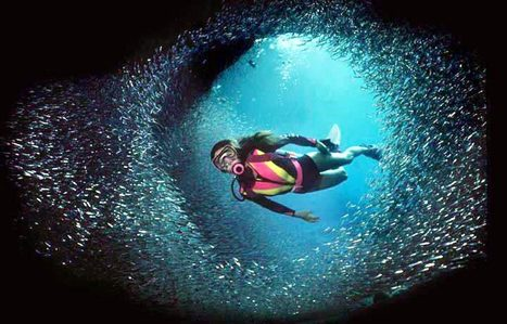kirkscubagear---your home on the net for scuba! | All about water, the oceans, environmental issues | Scoop.it