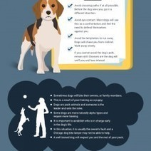 How to avoid a dog's bite | Cary J. Wintroub- Chicago Personal Injury Lawyer | Illinois Accident Attorney | Scoop.it