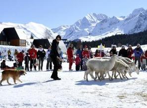 Val Louron. Ces chiens qui ont la montagne dans le sang - La Dépêche   Louron Peyragudes Pyrénées   Scoop.it