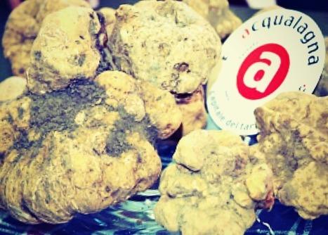 Tagliolini con Tartufi Bianchi d'Acqualagna (Tagliolini with White Truffles) | Le Marche and Food | Scoop.it