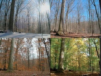 15 months of a forest's life shown in 3-minute time-lapse | forestry | Scoop.it