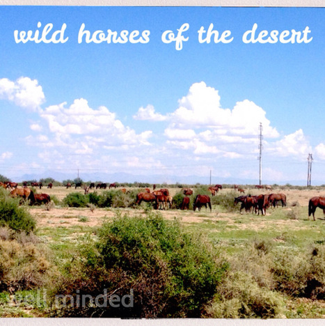 the wild horses of the Arizona desert | Horseback Riding | Scoop.it