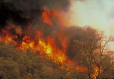 Incendies et sécheresses répétés, une menace pour la forêt méditerranéenne | EntomoNews | Scoop.it