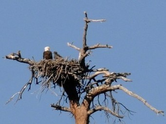 Third-Graders on Field Trip Spot Rare Bald Eagle Chick | Vertical Farm - Food Factory | Scoop.it