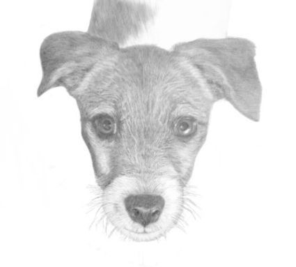 Drawing Animals Ebook | Art and Design and Landscaping | Scoop.it