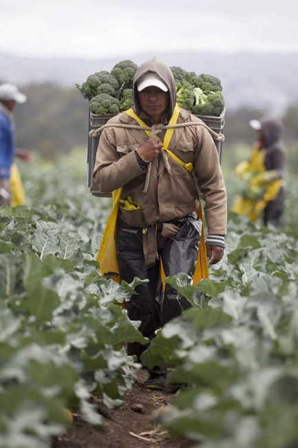 Les mondes paysans (2/4) : Le paysan est mon voisin | Circuits courts | Scoop.it