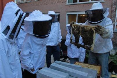 Des abeilles pour soigner les hommes | Chronique d'un pays où il ne se passe rien... ou presque ! | Scoop.it