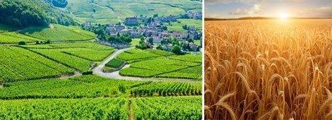 Les viticulteurs résistent mieux à la crise que les autres agriculteurs   Le vin quotidien   Scoop.it