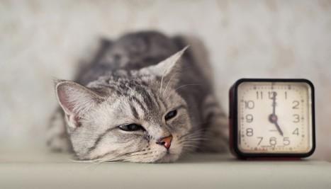 Gli 8 ingredienti di un sonno perfetto secondo la ricerca | Parliamo di psicologia | Scoop.it