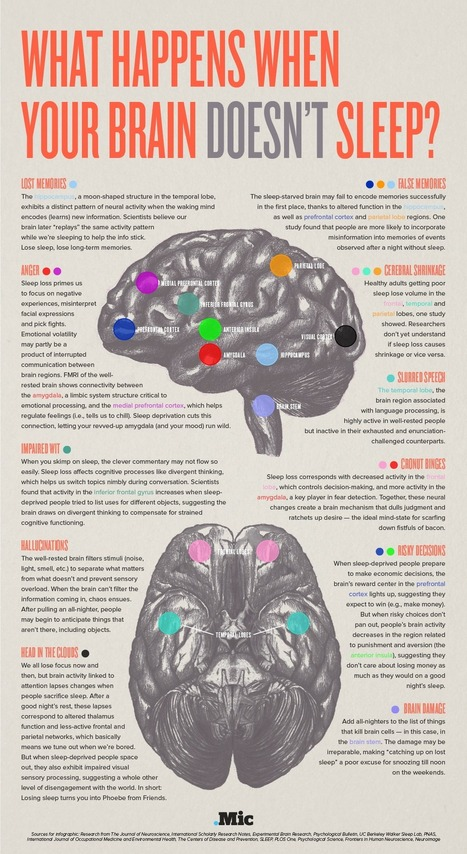 This Is Your Brain on Not Enough Sleep (Infographic) | Teaching and Learning Resources for Faculty | Scoop.it