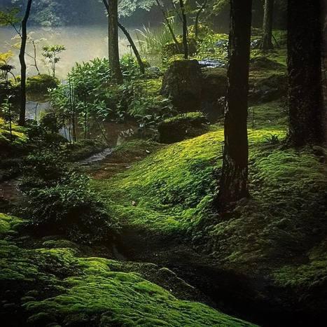 "James Kemlo aka 早川純平 on Instagram: ""The moss gardens of Saihōji, Kyōto Japan. Constructed in 1339 by the Zen priest Musō Kokushi (1275-1351). There are 44 species of moss…"" | Zen Gardens | Scoop.it"