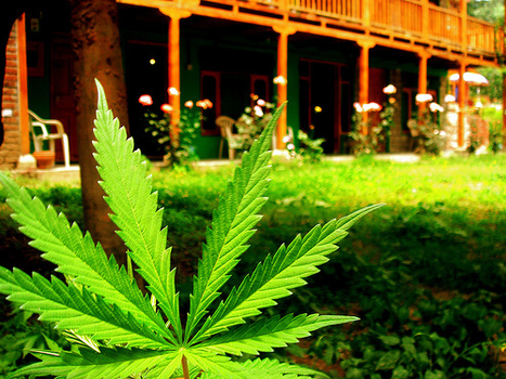 Why Election Day Marks the Beginning of the End of Marijuana Prohibition   fitness, health,news&music   Scoop.it