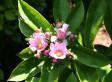 Molly Hahn: Buddha Doodle - 'Flowering' | Sending My Love | Scoop.it