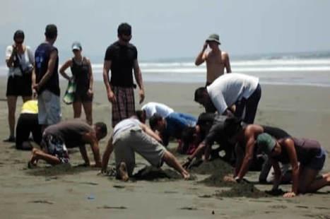 "Volunteer Sea Turtles Programs | ""#Volunteer Abroad Information: Volunteering, Airlines, Countries, Pictures, Cultures"" | Scoop.it"