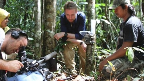 The devastation of Indonesia's forests - CNN | Silviculture and Forest News | Scoop.it