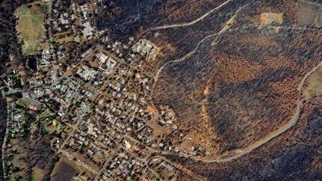 Study finds logging increased  intensity of Black Saturday fires   Australian Forests   Scoop.it