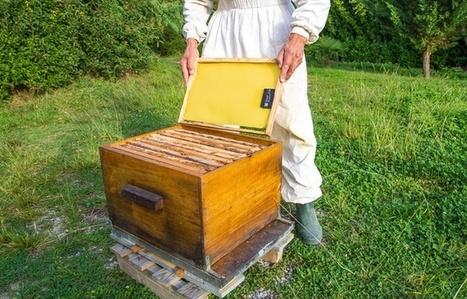 Grâce à BeeGuard, les ruches sont désormais suivies à distance   Un monde durable   Scoop.it