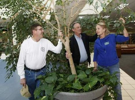 Gardening experts share the wealth | Tennessee Libraries | Scoop.it