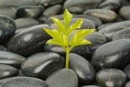 La voix de la patience | zenitude - toucher bien-être strasbourg | Scoop.it
