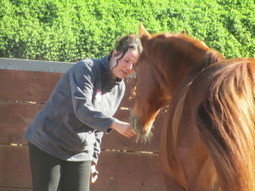 Secrets That You Need to Know About Horses   Horsemanship   Scoop.it