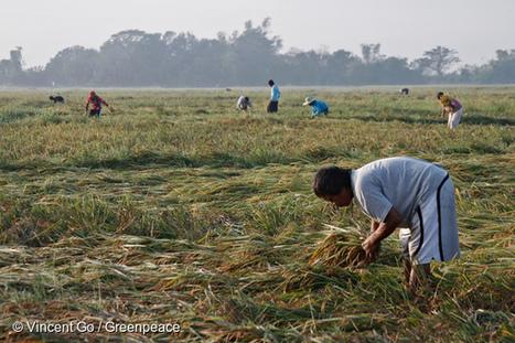 Catastrophes climatiques : les pollueurs doivent rendre des comptes en justice - Pressenza | Développement durable et efficacité énergétique | Scoop.it