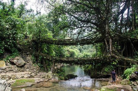 Les ponts vivants du Meghalaya | Actu & Voyage en Inde | Scoop.it