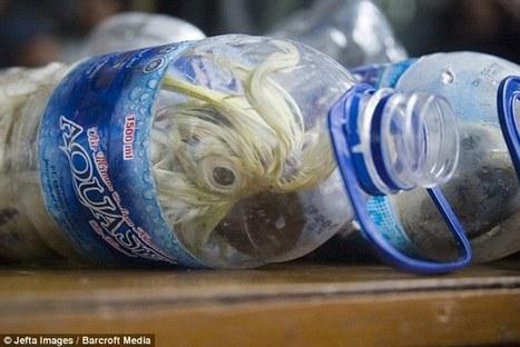 TRAFFICKING & BREEDING: cockatoos crammed into plastic bottles to get them through customs | > Animal Welfare | Scoop.it